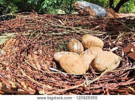 Barbed Wire and Rock: Bird's Nest