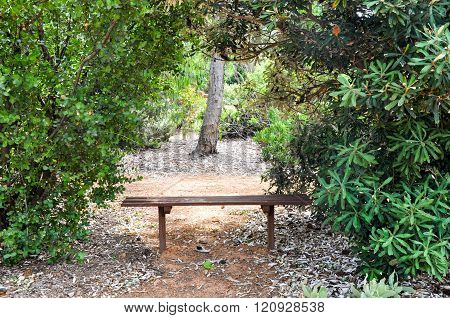 Bench between the Trees