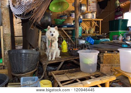 Dog in a traditional and messy Thai kitchen