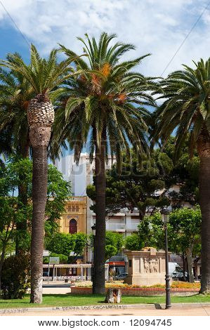 Palm trees in Spanish San Feliu de Gouxols poster