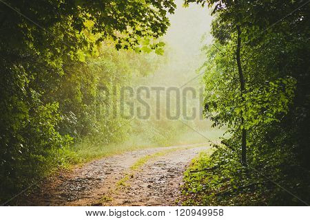dirt road in the woods