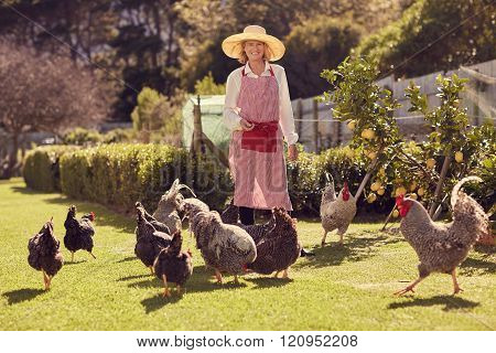 Senior woman farmer with chickens on her urban farm