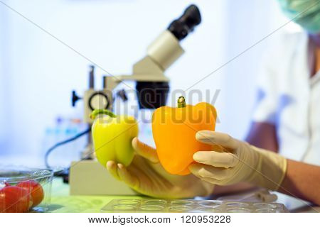 Food Testing In The Laboratory. Gmo Food