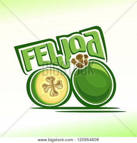 Vector illustration on the theme of feijoa