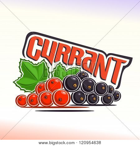 Vector illustration on the theme of currant