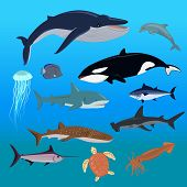 Marine fauna set of aquatic animals. Fauna animal, aquatic fauna, ocean or sea nature fauna poster