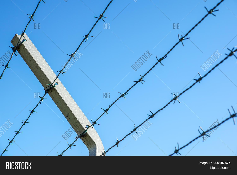 Coiled Razor Wire Image & Photo (Free Trial) | Bigstock