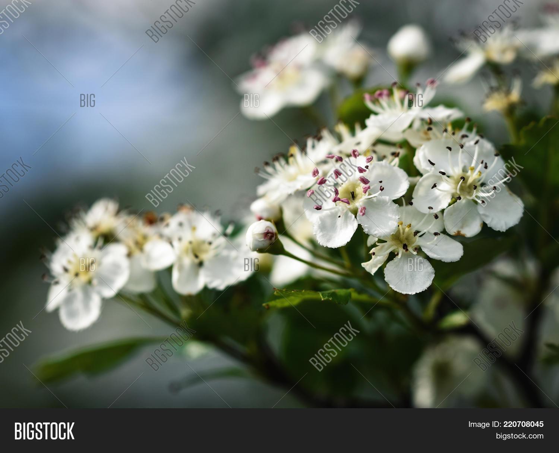 Nature Seasonal Spring Background Image Photo Bigstock