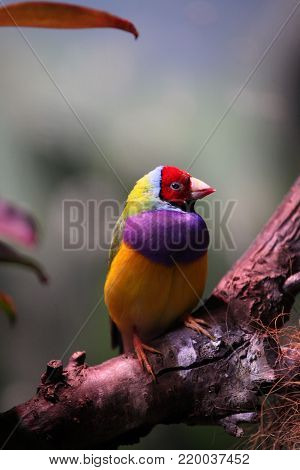 Tropical bir red head Wild Nature Moscow Summer