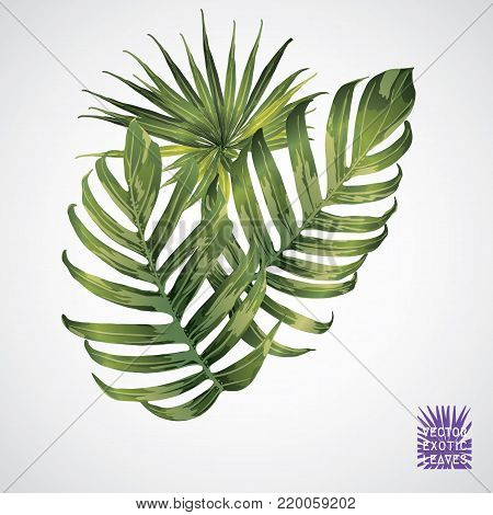 Tropical leaf. Vector green palm leaf. Silhouette of exotic plant. Botanical element isolated on white background. Summer hawaiian hand drawn vector tropical leaves. Monstera, fern, palm, hibiscus.