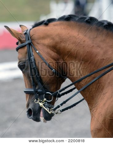 The Dressage Horse At Competitions