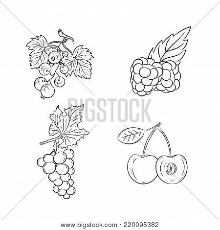 Collection set of hand drawn fruits isolated on white background. Vector illustration of currants, grapes, cherries and raspberries in vintage sketch style - stock vector