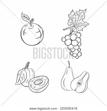 Collection set of hand drawn fruits isolated on white background. Vector illustration of apple, grape, plum and pear in vintage sketch style - stock vector