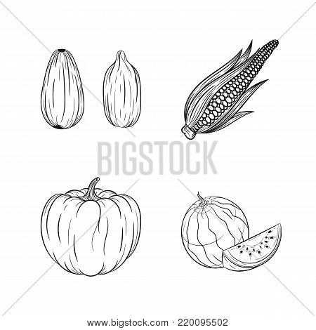 Collection set of hand drawn vegetables isolated on white background. Vector illustration of watermelon, pumpkin, corn and sunflower seed in vintage sketch style - stock vector
