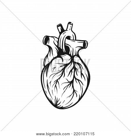 Heart vector illustration. For the design of prints, tattoos, stickers, logos. Hand drawn sketch
