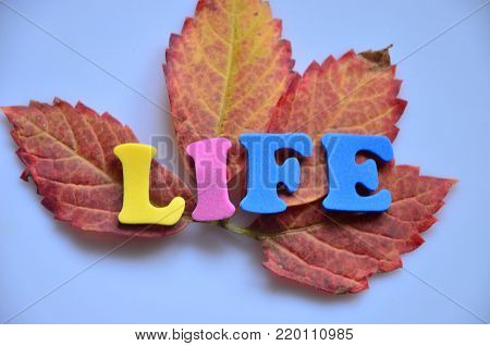 word life on an abstract colored background