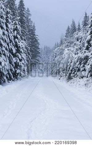Road to the winter forest. Way to the winter mountains. Winter composition. The leading road. Depth. Leading perspective.