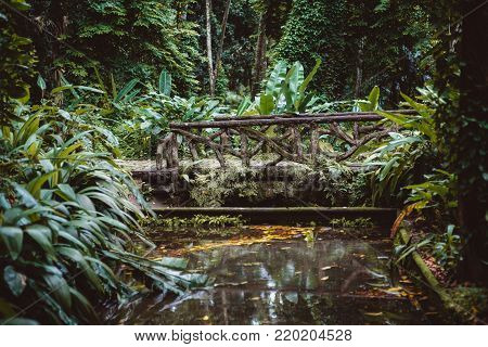 Mysterious pond with dry leaves in it in jungle forest with beautiful wooden authentic bridge over it; swampy terrain with small lake tiny bridge surrounded by multiple plants of rainforest