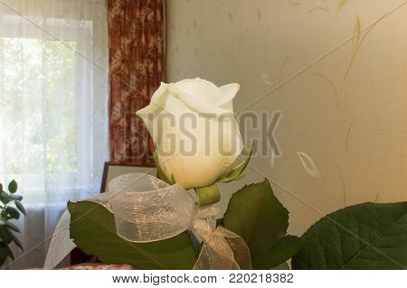 lonely white rose in the home interior