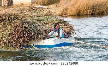 Lake Titicaca, Bolivia - September 2017: Woman in a boat carrying reed on the Titicaca lake in Bolivia