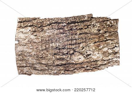 Old oak bark isolated on white background, design tamplate, place for text