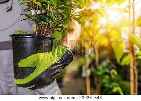 Gardener Planting Garden Plants. Caucasian Landscaper with Plant.