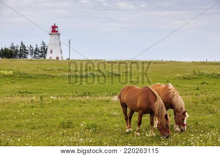 Horses in front of Panmure Head Lighthouse on Prince Edward Island. Prince Edward Island, Canada.
