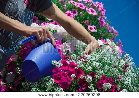 old woman watering flowers in pots on a balcony in the garden. Floriculture is hobby. Caucasian, elderly, mature mum, grandmother, senior cultivation ornamental plants. houseplants at summer