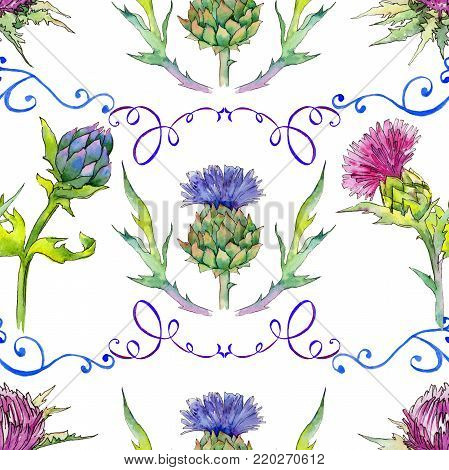 Wildflower thistle flower pattern in a watercolor style. Full name of the plant: thistle. Aquarelle wild flower for background, texture, wrapper pattern, frame or border.