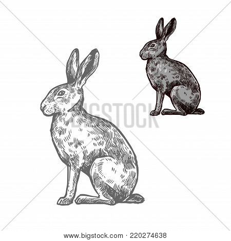 Hare or rabbit wild animal isolated sketch. Bunny, herbivorous mammal with long ears and grey fur for hunting sport and wildlife fauna symbol or t-shirt print design