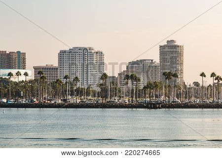 LONG BEACH, CALIFORNIA - SEPTEMBER 8, 2017:  Palm trees line the cityscape of Long Beach Harbor in the early morning, with a view of the downtown skyscrapers.
