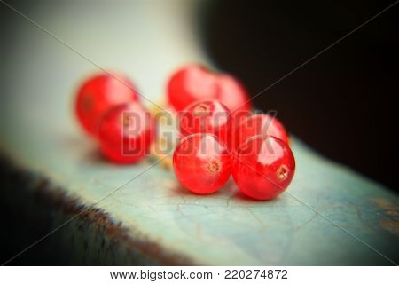 Closeup of fresh healthy redcurrant berries with dark background