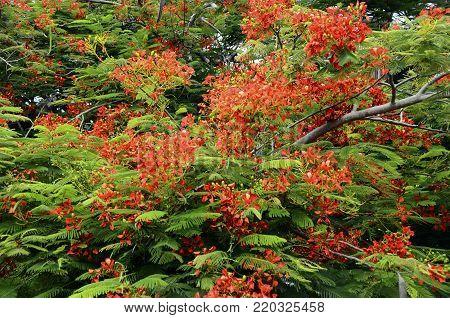 Ferns On Tree Trunk