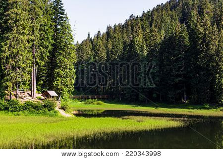 wooden arbor in forest near the lake. exquisite nature scenery in summertime. safe ecology environment concept. location Synevyr lake in Carpathian mountains, Ukraine