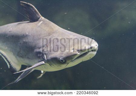 Floats Shark, photo taken under water. Sea.