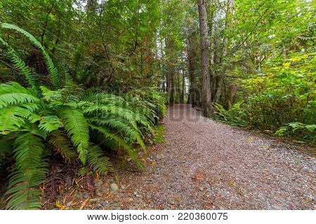 Hiking Trail with trees and ferns along Whatcom Falls Park in Bellingham Washington