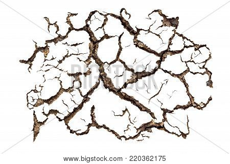 Pattern of cracked soil for design material isolated on white background