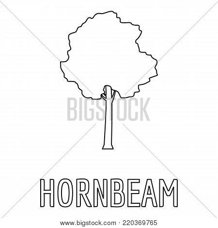 Hornbeam icon. Outline illustration of hornbeam vector icon for web