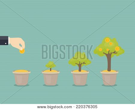 Growing money tree. Stages of growing. Coin seed