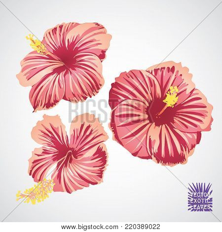 Hibiscus flower in pink red and yellow color. Vector silhouette of exotic plant. Botanical element isolated on white background. Summer hawaiian hand drawn vector tropical hibiscus. Exotic retro logo.