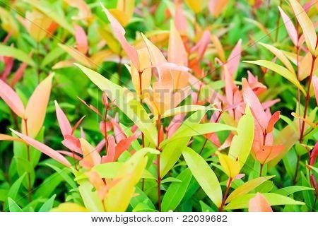 Ornamental Plants Roadside