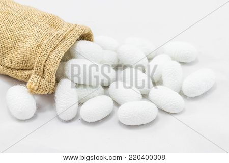 Silk cocoon in sack on white background
