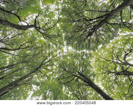 Tree canopy in park land at Clingendael, The Hague 2017