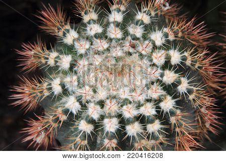 Epiphyte Plant Texture