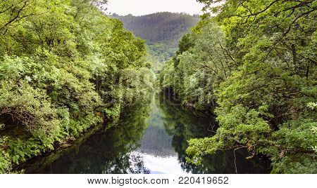 Aerial image of the river Eume in Galicia, Spain, with a very calm stream and tree-lined banks. Zone very wooded and very green. Without people