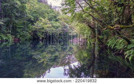 Very quiet image of the river Eume with the banks full of ferns and trees in a mountainous area of Galicia, Spain. Zone very wooded and very green. Without people