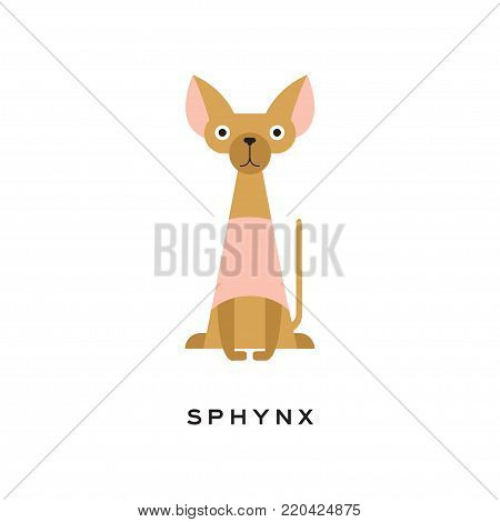 Egyptian sphynx cat with funny muzzle. Hairless kitten with long thin tail and big ears. Cartoon domestic animal character. Isolated flat vector illustration. Design for veterinary service or pet shop