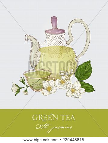 Colorful drawing of glass teapot with strainer, cup of green tea, jasmine leaves and flowers on gray background. Organic traditional beverage. Vector illustration hand drawn in antique style