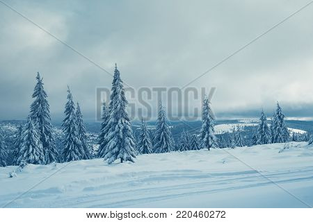 Snowy Road Through A Pine Forest