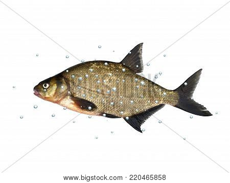 big fresh fish bream with bubbles on white background